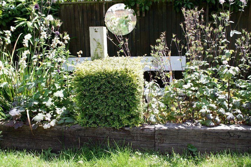 garden hedge cube form