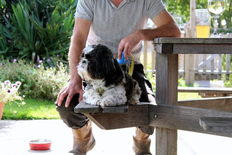 International Dog day a Shih Tzu Story