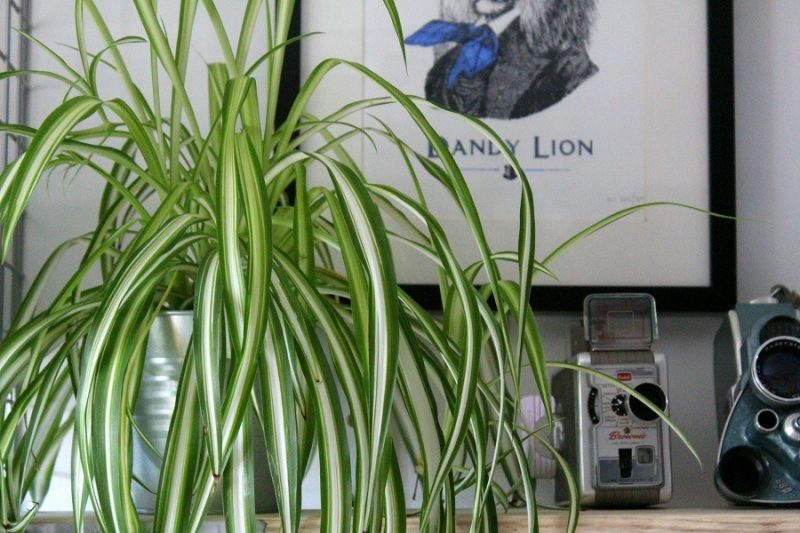 Interior Greenery in our home, it's a Jungle!