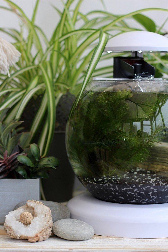 How I found Calm & Inspiration with a Tetra Cascade Globe