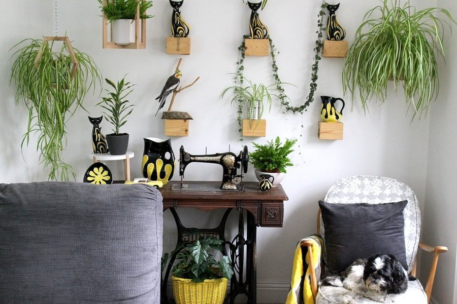 3 Top Tips How to display House plants at Home