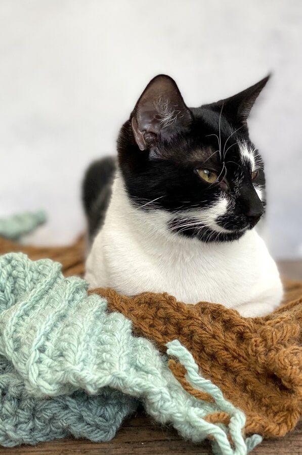kitten sitting on a crochet jumper